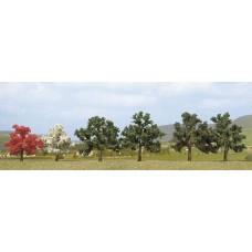 Poplar Tree 150mm